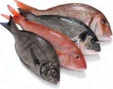 Η αξία των ψαριών
